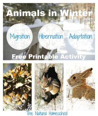animals in winter migration hibernation and adaptation free printable homeschool freebies. Black Bedroom Furniture Sets. Home Design Ideas